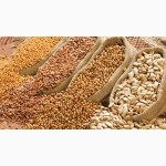 Агропредприятие закупает зерновые культуры большими объемами