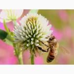 Продам бджолопакети 4 рр. кінець квітня, ціна договірна