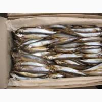 Продам креветки Black Tiger, широкий выбор морепродуктов