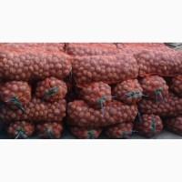 Продам картоплю для громадських харчувалень