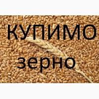 Компанія купує пшеницю 3-6 клас з місця по Волинській області