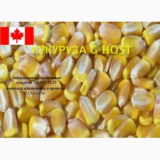 Семена кукурузы канадской Ален, Элисон, Джи Хост, ДК315