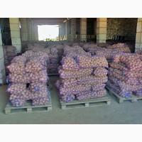 Продам картоплю гренаду, білароза середньо-крупну