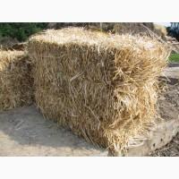Солома тюкованная пшеничная с доставкой
