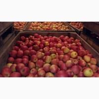 Продам яблоки оптом с холодильника
