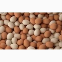 Продам куриное яйцо высшего качества С0 С1 С2
