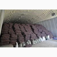 Картофель молодой оптом из Беларуси 3+, 4+ (молодой), 5+ от производителя, 5, 5 грн./кг