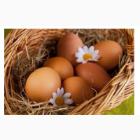 Редбро яйца инкубационые