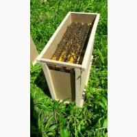 Бджолопакети, Бджоломатки Бакфаст