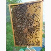 Бджолосім#039;ї та бджолопакети з доставкою