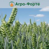 Озима Пшениця ГЮСТАВ (Еліта)