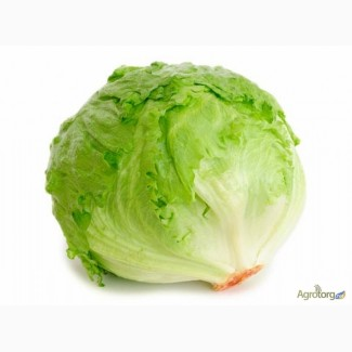Продам салат айсберг оптом, крупным оптом