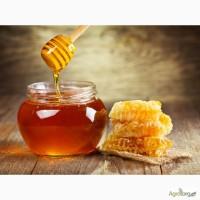 Куплю мед Дорого оптом