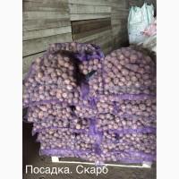 Продам отличный вкусный картофель оптом
