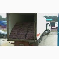КУПЛЮ картофель оптом от 5 тонн 6, 5 грн/кг