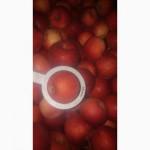 Продам яблоки Айдаред