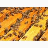 Продаж бджолопакетів