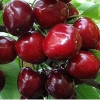 Фрукти (персики, черешня, абрикосы и др) овощи( помидоры, огурцы и др)