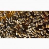 Продам пчел, купить пчел