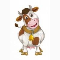 Продається корова первістка