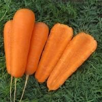 Продам морковь. Продам овощи. Доставка по Украине