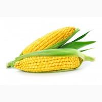 Семена кукурузы Почаевська 190, Оржиця 237 МВ и др