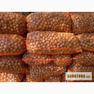 Продам грецкий орех (кругляк) в любом количестве