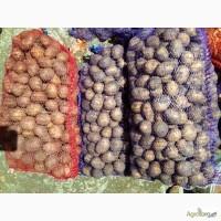 2грн Продам оптом Картофель,картошку Аннушка
