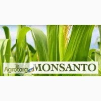 Гибриды кукурузы F1 Монсанто ДЕС 3511