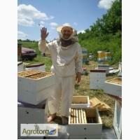 Продам пчелосемьи на 145