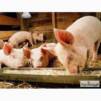 Комбикорм для свиней (Старт, Гроуэр, Финиш). Высокого качества со склада