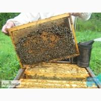 Продам пчелосемьи, пчелопакеты, семьи пчел