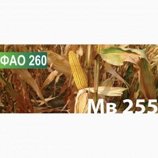 Продам семена кукурузы венгерской селекции Мv 255 (ФАО 250)