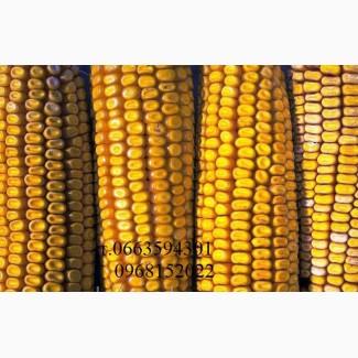 Семена кукурузы Монсанто, Вниис, Маис, Пионер