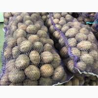 Продам элитный семенной картофель
