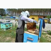 Продаю пчелы карпатка