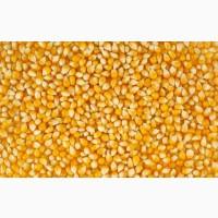 Купим кукурузу на постоянной основе (Експорт)