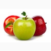 Закуповуємо яблука на переробку дорого підприємство