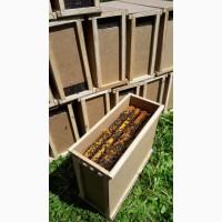 Продам бджолопакети ( пчелопакеты, пчелосемья ). Бджола карпатська