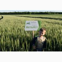 Елітне насіння озимої пшениці Металіст - стабільний врожай навіть в стресових умовах