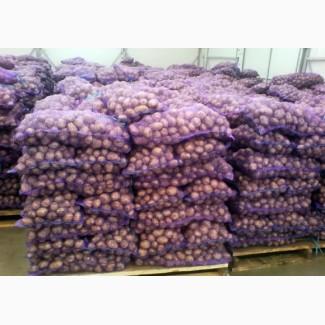 Продам картофель отличного качества белороса с доставкой по всей территорий Украины