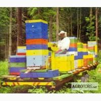 Пчелопакеты продам