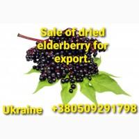 Наше предприятие, в Украине, продает сушеную бузину