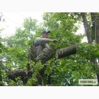 Удаление деревьев Киев. Кронирование, обрезка деревьев