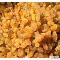 Изюм (Голд-Gold, Иран) от импортера оптом