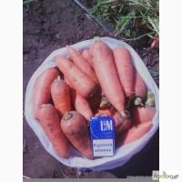 Продам морковь ( Абако)