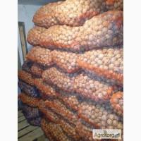 Продам бойный грецкий орех 2016г, кругляк, в сетках, сухой Харьков