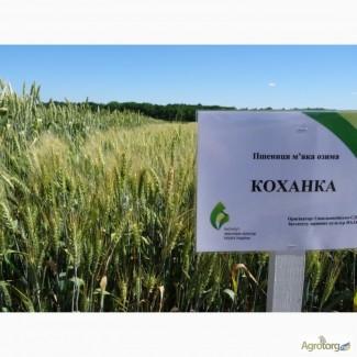 Пшеница озимая Коханка
