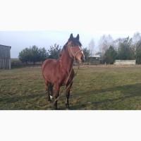 Кінь продам
