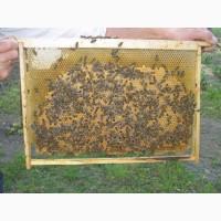 Продам бджолопакети 2018